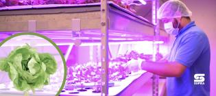 Iluminación LED Horticultura